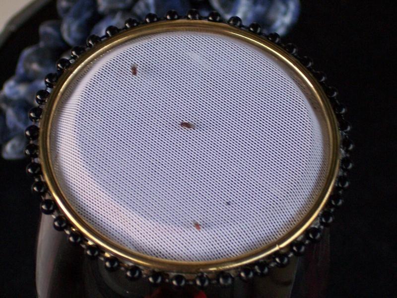 Angry fruit flies
